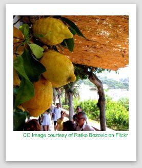 capri lemoncello, capri lemons image