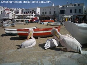 pelicans mykonos photos, mykonos attractions