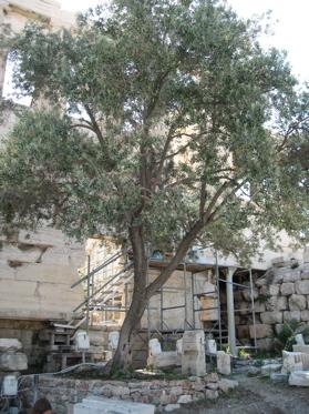athens images, acropolis images, parthenon images