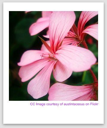 capri flora